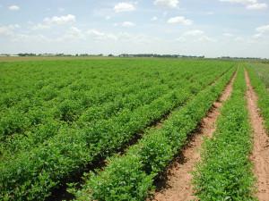Agriculture Land Sale NH 24 Gorakhpur UP